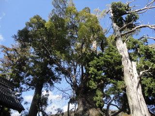 河津 来宮神社の木々